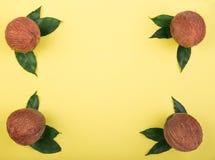Quatro cocos frescos em um fundo amarelo brilhante Cocos completamente perfeitamente organizados de vitaminas saborosos com folha Foto de Stock
