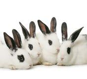 Quatro coelhos imagens de stock royalty free