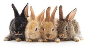Quatro coelhos pequenos imagens de stock