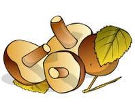 Quatro cogumelos Imagens de Stock Royalty Free
