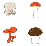 Quatro cogumelos diferentes Fotos de Stock Royalty Free