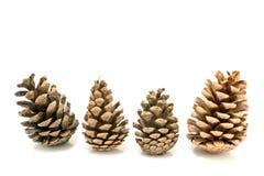 Quatro cones do pinho Fotos de Stock
