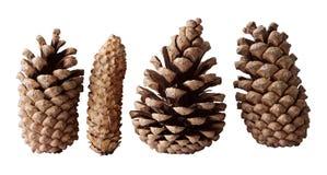 Quatro cones do pinho Imagens de Stock Royalty Free
