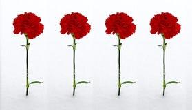 Quatro cravos vermelhos na neve Foto de Stock