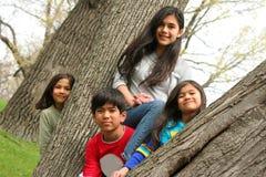 Quatro crianças em uma árvore foto de stock