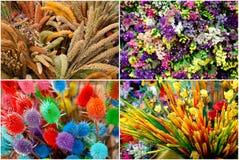 Quatro estações coloridas Fotos de Stock