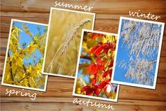 Quatro estações da coleção das imagens do ano Foto de Stock Royalty Free