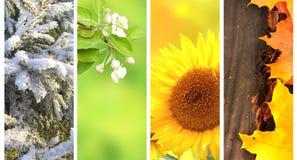 Quatro estações do ano Fotos de Stock Royalty Free