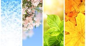 Quatro estações do ano Foto de Stock Royalty Free