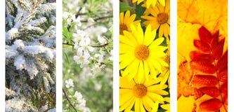 Quatro estações do ano Fotografia de Stock Royalty Free