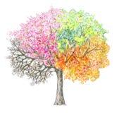 Quatro estações Handdrawing da árvore isolado Fotos de Stock