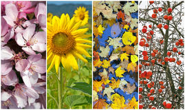 Quatro estações. Mola, verão, outono, inverno. Imagens de Stock Royalty Free
