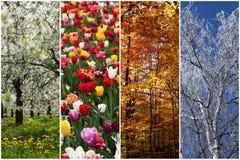 Quatro estações Imagens de Stock Royalty Free