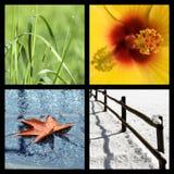 Quatro estações Imagem de Stock Royalty Free