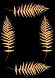 Quatro Ferns outonais Imagens de Stock Royalty Free