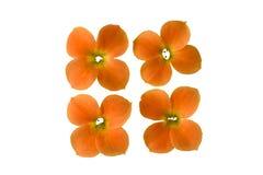 Quatro flores Imagens de Stock Royalty Free