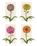 Quatro flores Fotografia de Stock Royalty Free