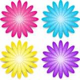Quatro flores coloridas Fotografia de Stock Royalty Free