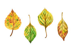 Quatro folhas na técnica da aquarela ilustração do vetor
