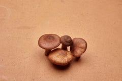 Quatro fungos Imagem de Stock Royalty Free