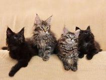 Quatro gatinhos imagens de stock