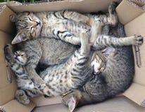 Quatro gatinhos bonitos agradáveis imagem de stock royalty free