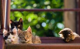 Quatro gatinhos coloridos em um fundo natural Tiro do verão imagens de stock royalty free