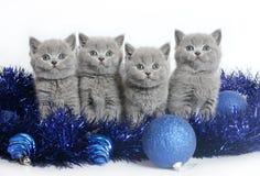 Quatro gatinhos com esferas do Natal. Fotografia de Stock