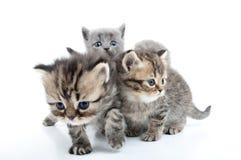 Quatro gatinhos que andam junto Imagem de Stock Royalty Free