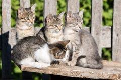 Quatro gatinhos que sentam-se na placa imagem de stock royalty free