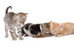 Quatro gatinhos sentam-se Fotografia de Stock