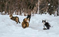 Quatro gatos na neve Imagens de Stock