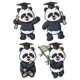 Quatro ilustrações da graduação da panda ilustração stock
