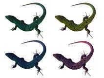 Quatro lagartos fotos de stock
