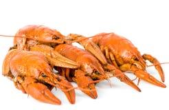 Quatro lagostas fervidas Fotografia de Stock