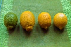 Quatro limões da mentira diferente da maturidade em uma tabela ou em um fundo branco imagens de stock