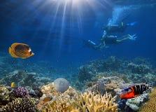 Quatro mergulhadores de mergulhador que exploram a parte inferior de mar Imagens de Stock