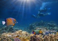 Quatro mergulhadores entre peixes Fotos de Stock Royalty Free