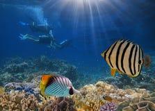 Quatro mergulhadores entre peixes Foto de Stock