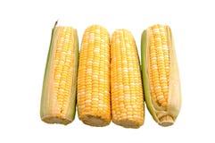 Quatro orelhas de milho sobre o branco Fotos de Stock Royalty Free