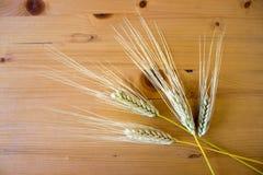 Quatro orelhas do trigo no fundo de madeira imagens de stock royalty free