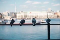 Quatro pombos que sentam-se em uma cerca fotos de stock royalty free