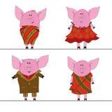 Quatro porcos Imagem de Stock
