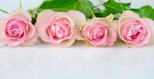 Quatro rosas cor-de-rosa imagem de stock royalty free
