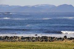 Quatro surfistas no inverno foto de stock