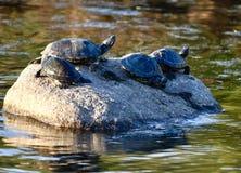 Quatro tartarugas em uma rocha imagens de stock