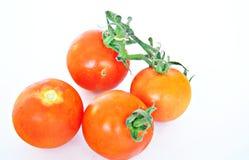 Quatro tomates Imagem de Stock