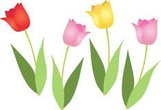 Quatro tulips Fotos de Stock Royalty Free