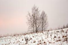 Quattro alberi in cumuli di neve sulla collina Immagini Stock Libere da Diritti