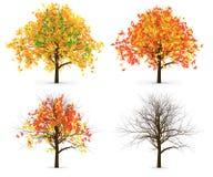 Quattro Autumn Trees Leaves Color Variation Immagine Stock